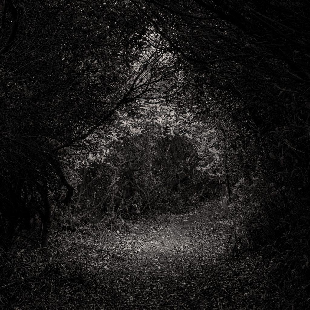 Deepdene Terrace Path